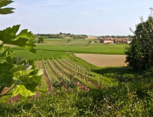 Strada dei Vini e dei Sapori Mantovani in Realtà Aumentata